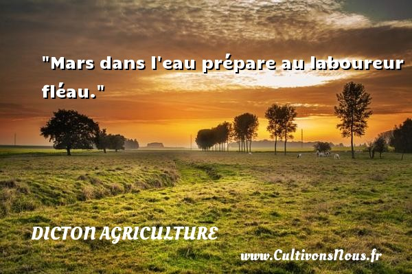 proverbe africain agriculture