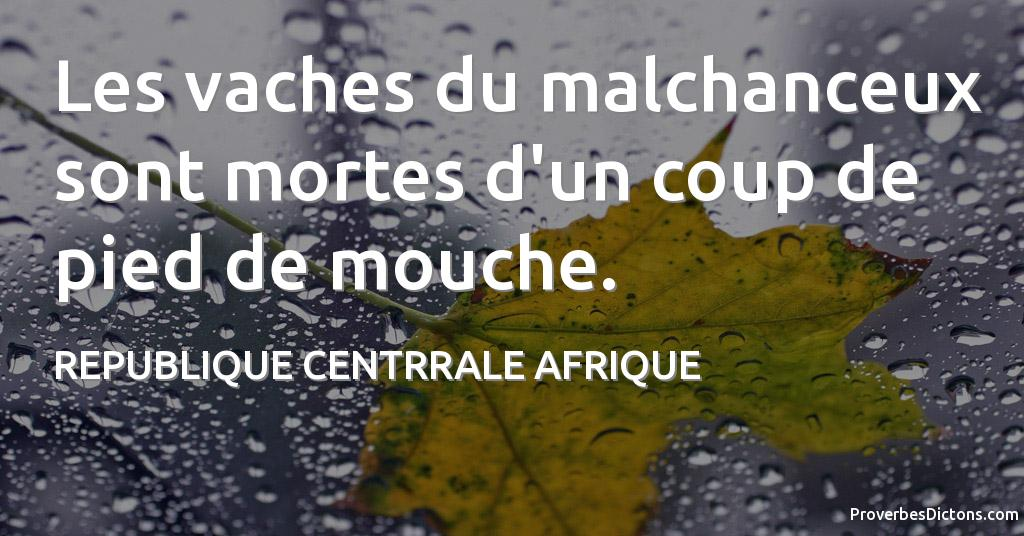 proverbe africain mouche