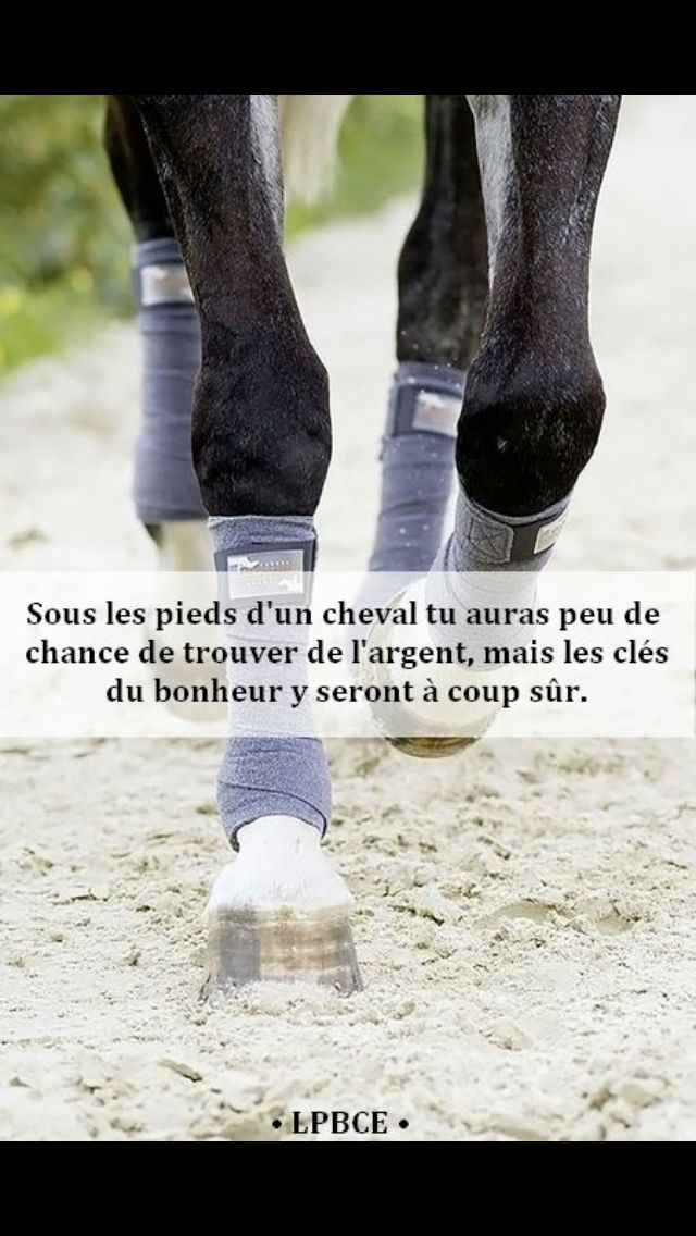 proverbe amour cheval cavalier