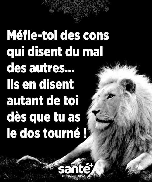 proverbe amour lion