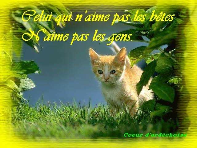 proverbe animaux