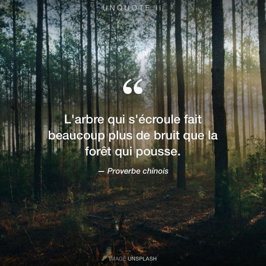 proverbe chinois arbre foret