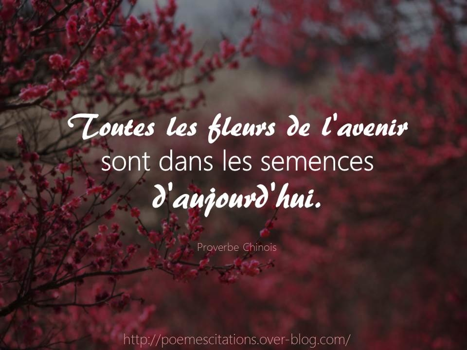 proverbe chinois fleur