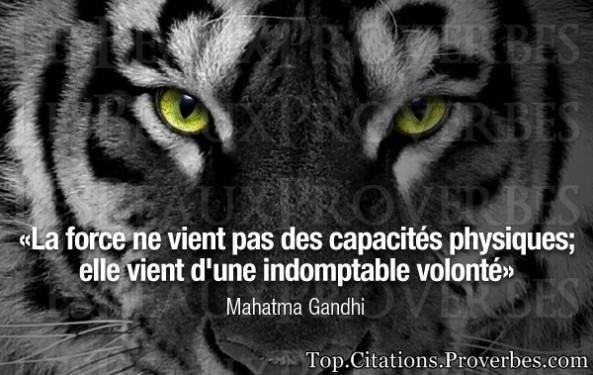 proverbe chinois force