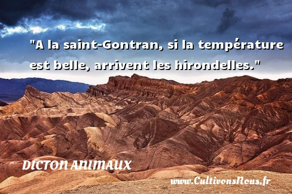 proverbe chinois hirondelle