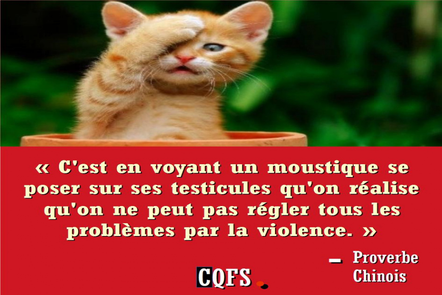 proverbe chinois moustique testicule