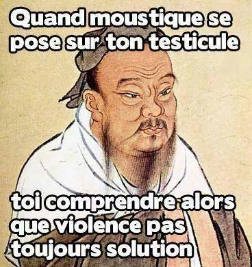 proverbe chinois moustique