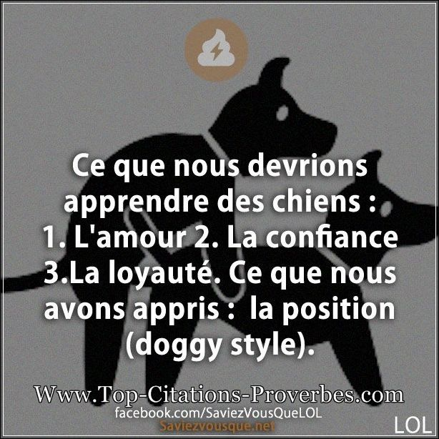 proverbe drole animaux